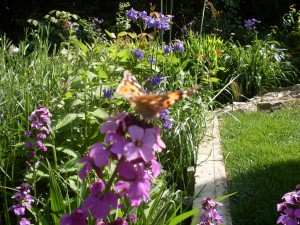 Code for Sustainable Homes Surveys, Painted lady butterfly on flower